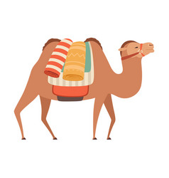 Camel with bridle and saddle desert animal with vector