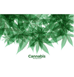 Green cannabis or marijuana leaves background vector