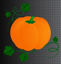 Halloween pumpkin with leaves vector image