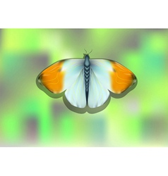 Orange tip butterfly vector