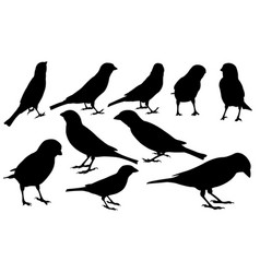 Set different sparrows vector