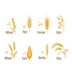 Cereals icon set vector image vector image