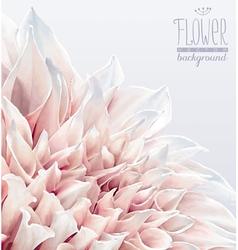 Dahlia flower background 2 vector image vector image