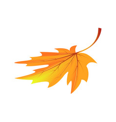 autumn golden yellow leaf vector image