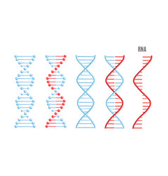 Dna rna molecule helix spiral genetic code vector