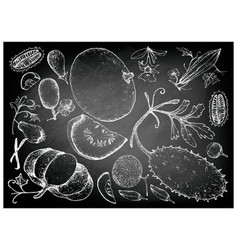 hand drawn of gourd and squash fruits vector image