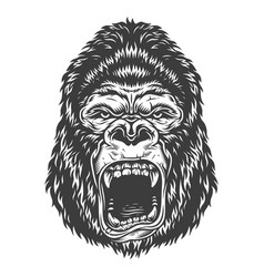 head of gorilla vector image
