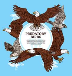 Predatory birds sketch eagle or falcon vector