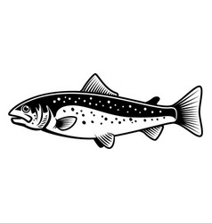 trout fish sign on white background salmon vector image