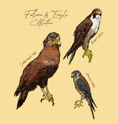 falcon and eagle hand draw sketch vector image