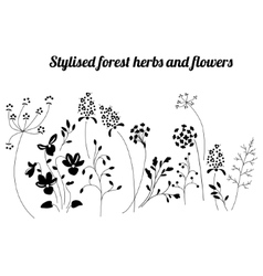 Floral template with stylized herbs and plants vector image