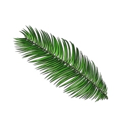 Full fresh leaf of sago palm tree sketch vector