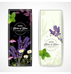 Herbal Banners With Wildflowers And Spices vector