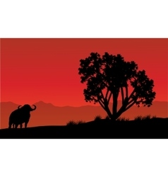 Single bull silhouette in fields vector