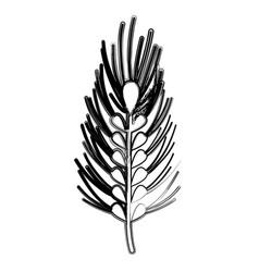 figure healthy wheat organ plant nutricious vector image vector image