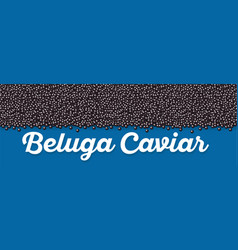 beluga caviar banner in cartoon style vector image