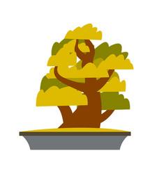 bonsai japanese cartoon tree growing in pot vector image