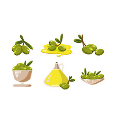 fresh green olives and oil set healthy organic vector image