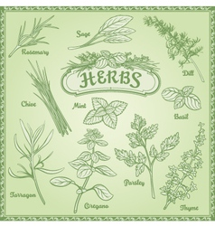 Outline Herbs Set vector image