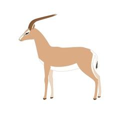 gazelle vector image