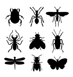 Insect animal icon flat isolated bug ant vector