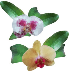 polygonal orchids flowers with leaves isolated vector image