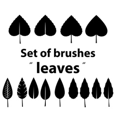 Set of brushes leaves vector