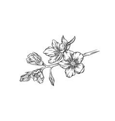 flower branch hand drawn monochrome floral design vector image
