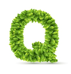 Letter Q alphabet of green leaves vector image