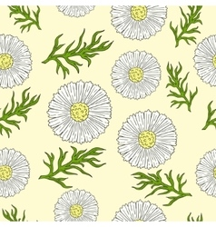 Pattern with camomile and leaves hand drawing vector image