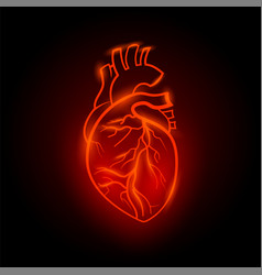 Red neon human heart anatomical vector