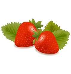 two strawberries with three leaves vector image