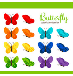 colorful butterfly collection vector image vector image