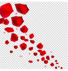 Abstract natural rose petals on transparent vector