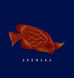 Beautiful red arowana fish 02 vector