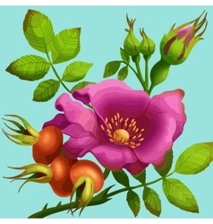 Bright wild rose vector