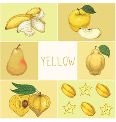education game yellow fruits vector image