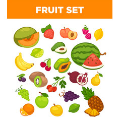 Fresh farm fruits and berries isolated vector