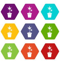 hemp in pot icon set color hexahedron vector image