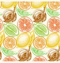 Sketch background fruit citrus vector