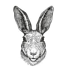 hand-drawn portrait of rabbit easter bunny vector image vector image