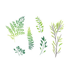 cartoon abstract green plant set icon vector image