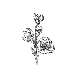 flower black and white hand drawn floral design vector image