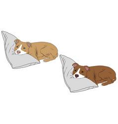 Pitbull puppy image vector