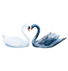 Watercolor hand drawn swans vector image vector image