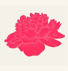 Beautiful peony flower in vintage colors isolated vector