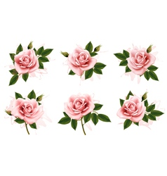 Beautiful set of pink ornate roses with leaves vector