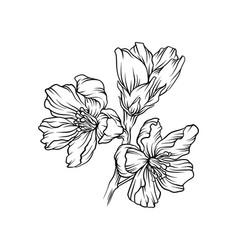 flowering branch monochrome floral design element vector image