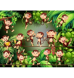 Monkeys doing different things in jungle vector