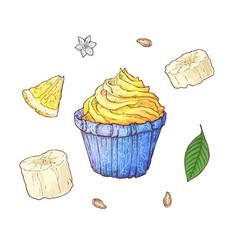 set banana cupcake hand drawing vector image